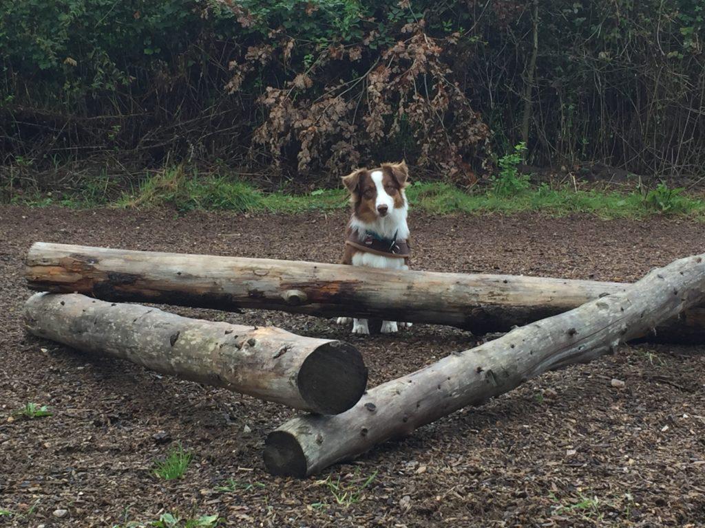gartenspielzeug.org - Training mit dem Hund im Garten