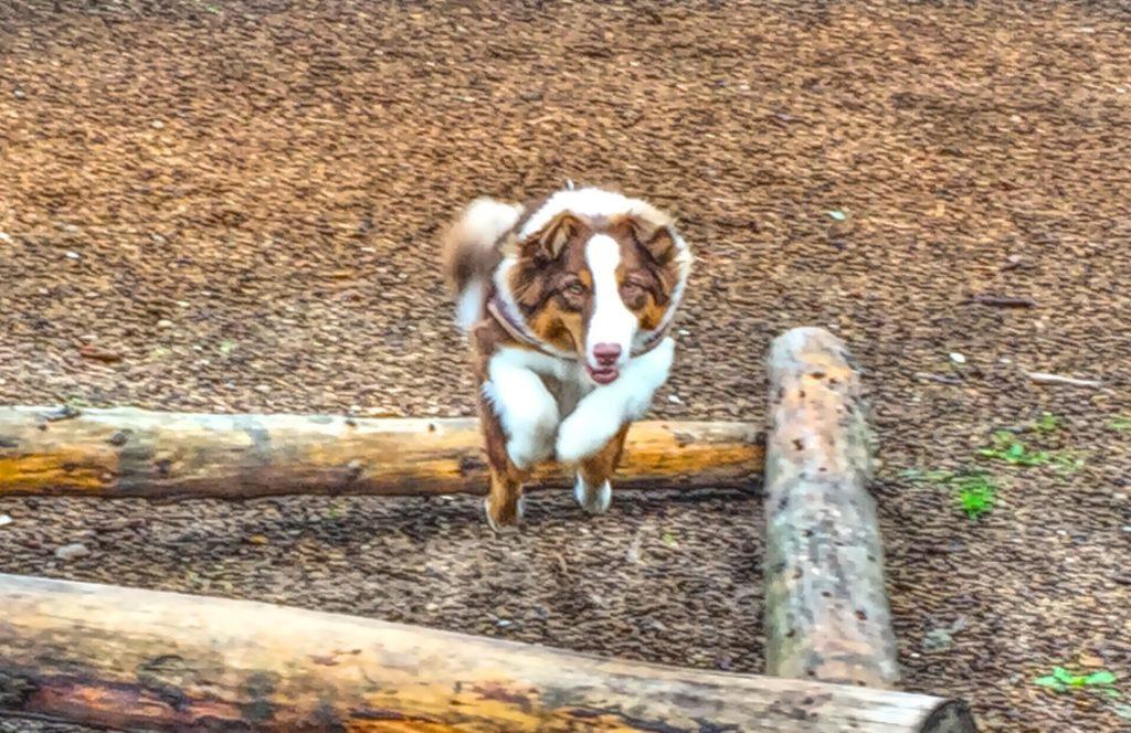 gatenspielzeug.org - Training mit dem Hund im Garten