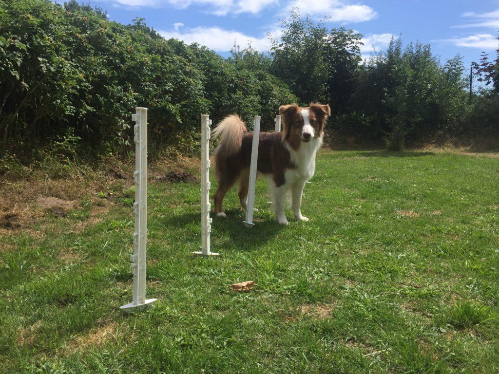 Wildzaunpfähle im Hundesport