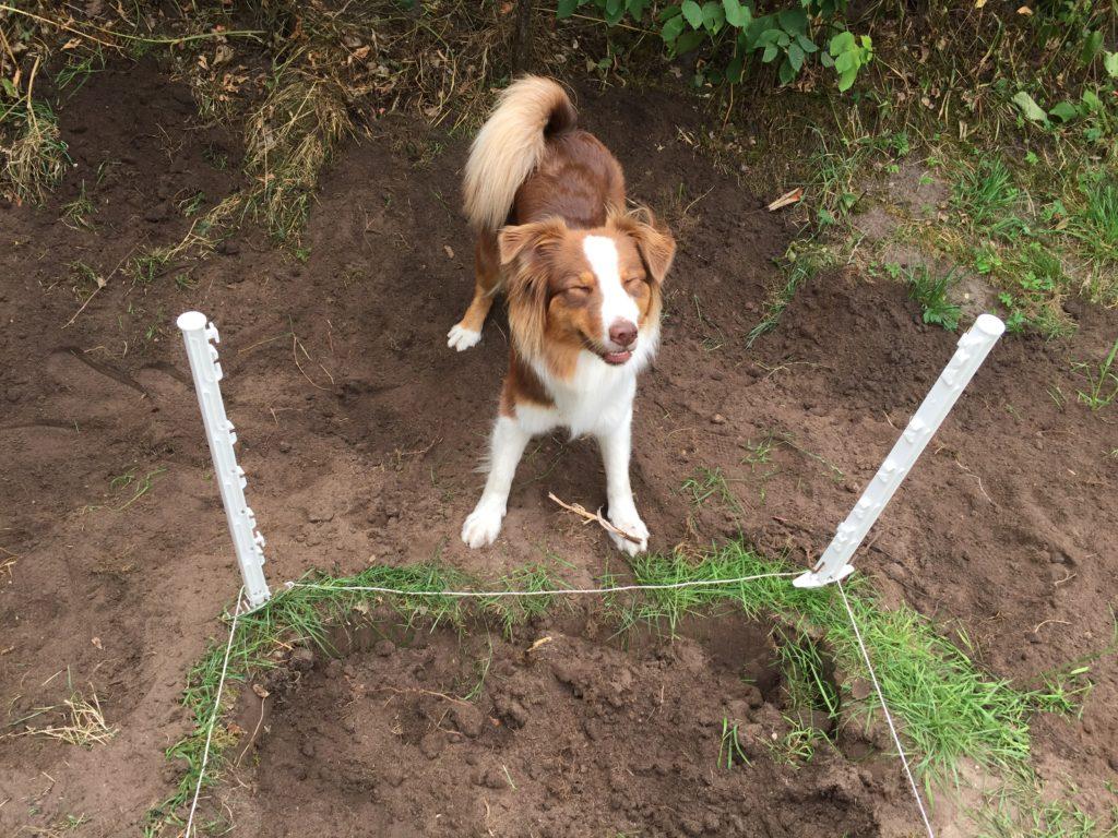 Hundepool bauen