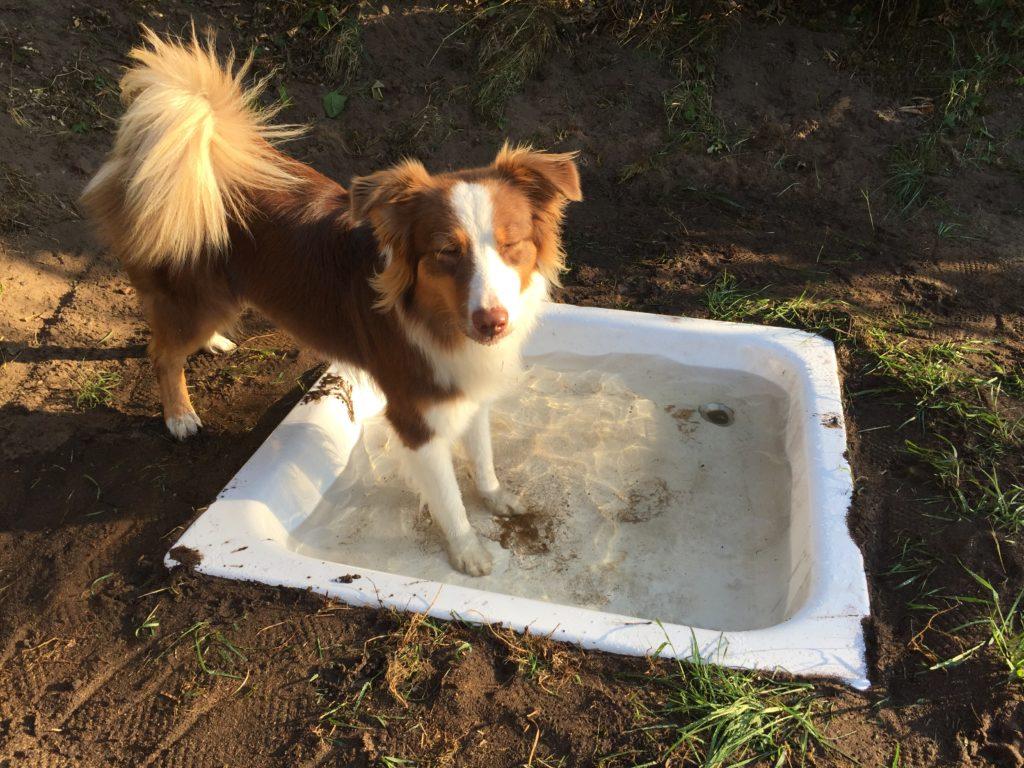 Hundepool bauen leicht gemacht