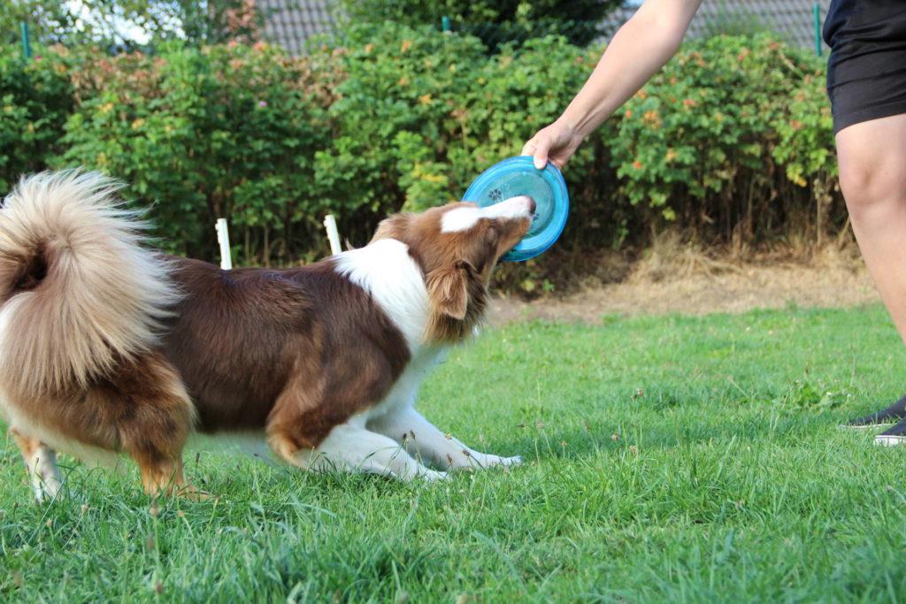 Hundesicherer hundegerechter Garten -Mensch und Hund im Garten