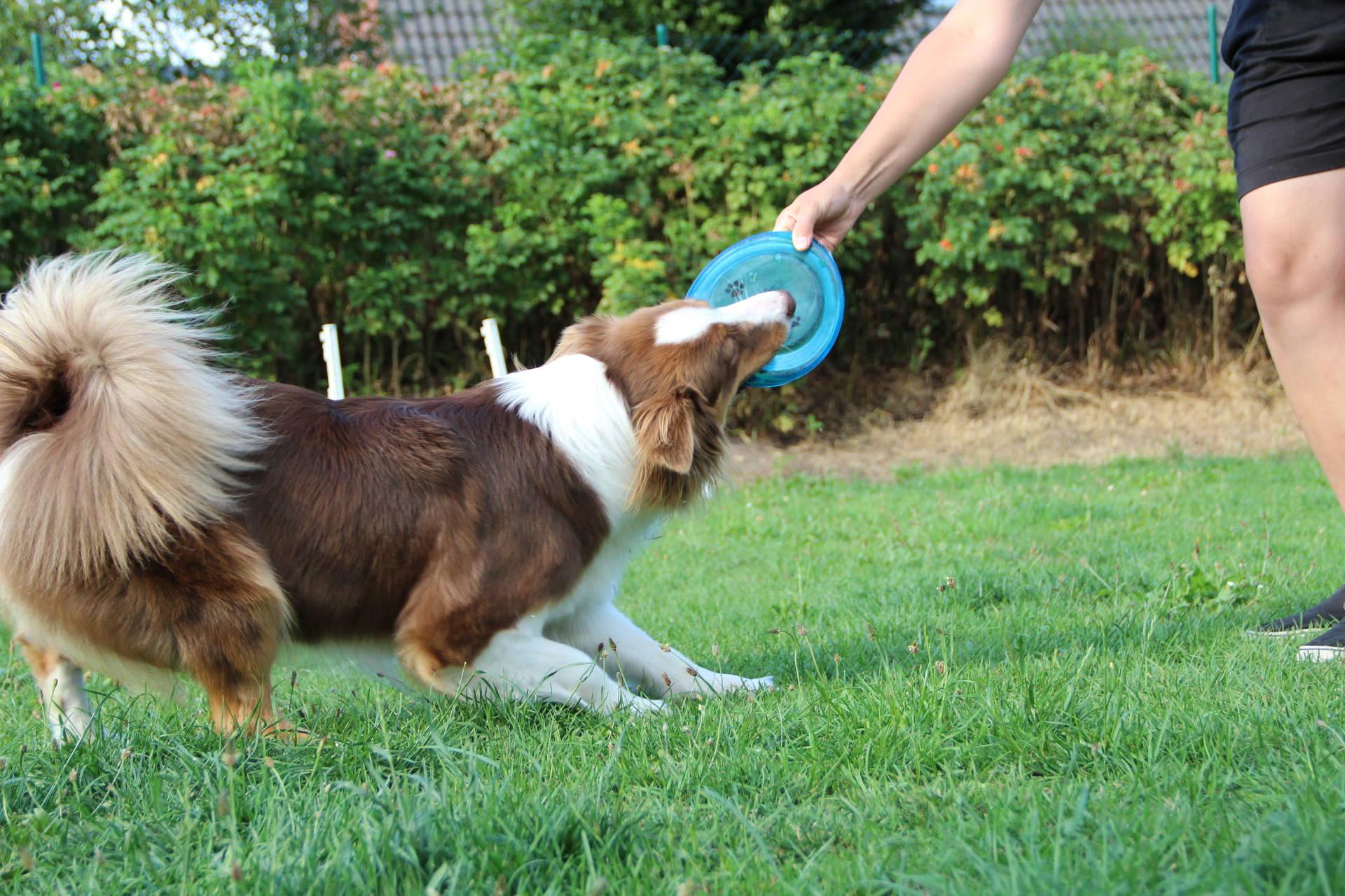 Das Sollte In Einem Hundegerechten Garten Nicht Fehlen Gartenspielzeug