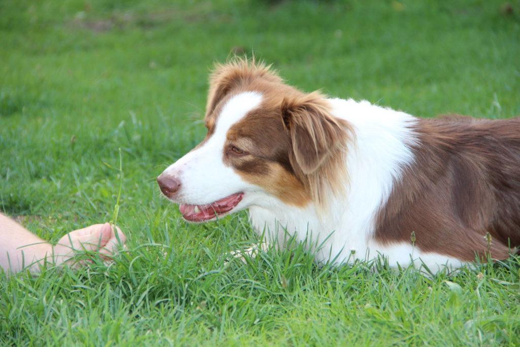 Discdogging - Frisbee mit Hund