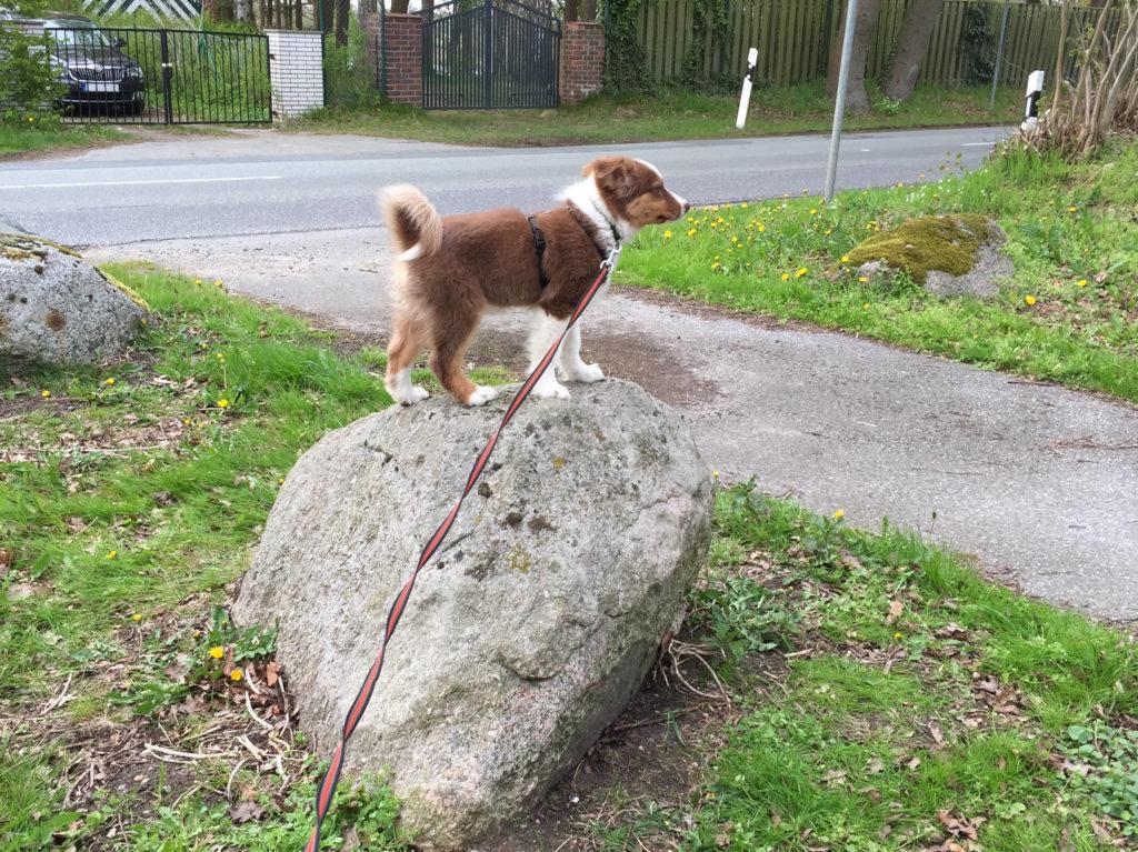 Hundetricks gartenspielzeug.org