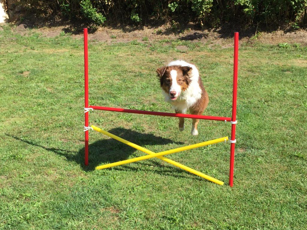 Slalomstangen und Hürden Set für den Hundesport im Garten