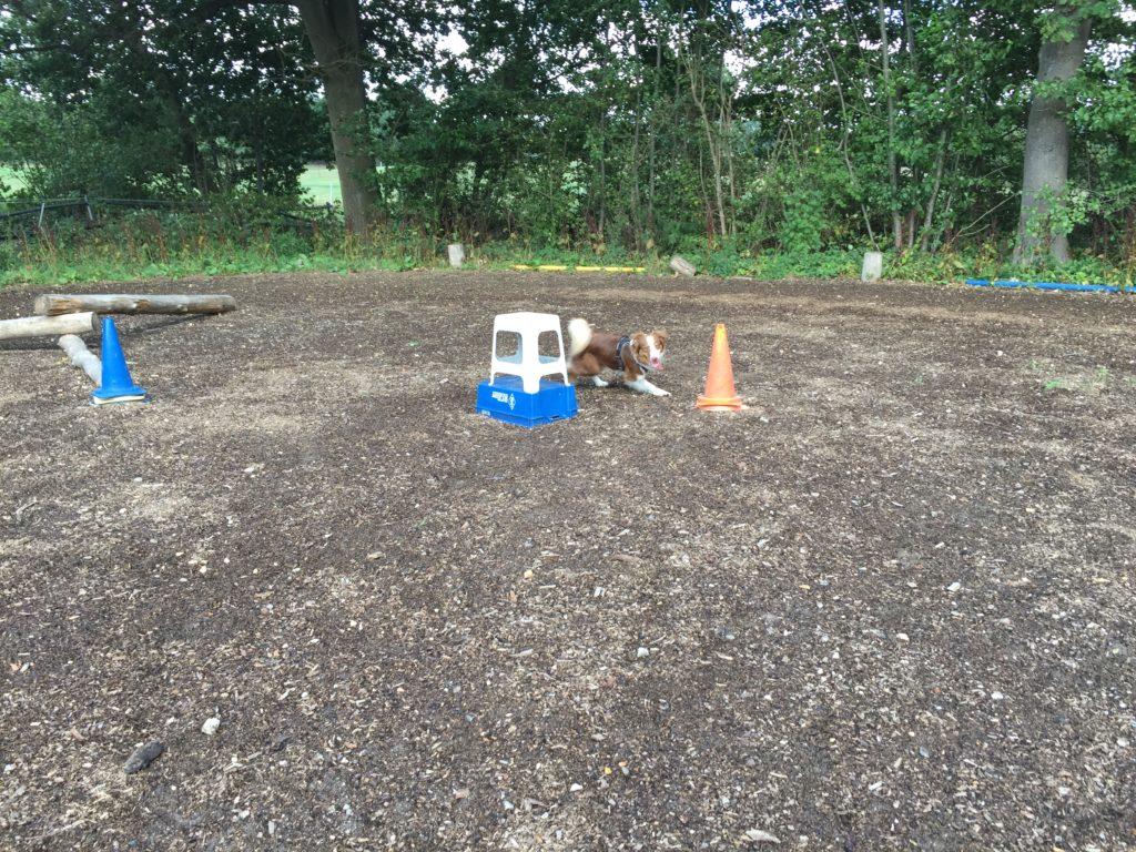 Gartenspielzeug - Kommando Herum
