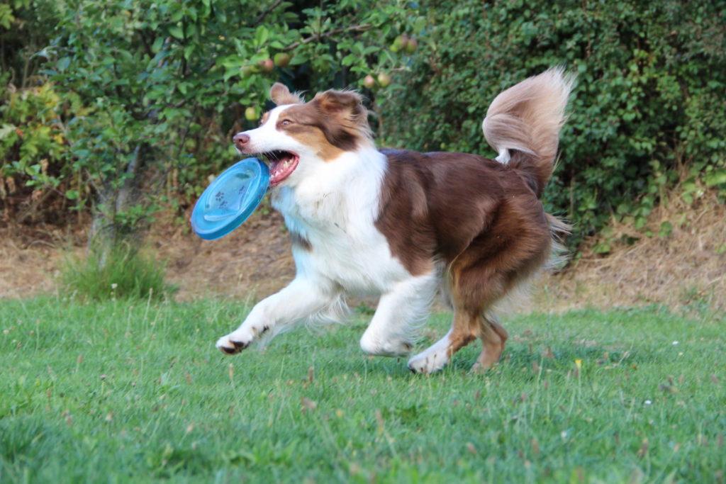 Kauartikel - Kauspielzeug für Hunde
