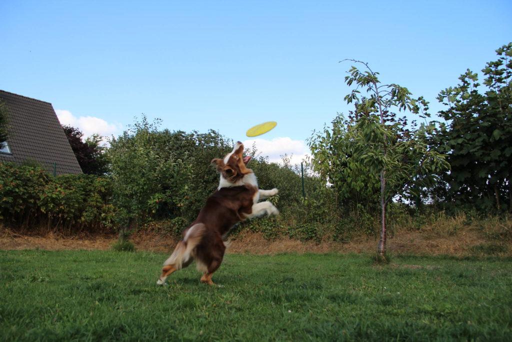 Gartenspielzeug Hund Frisbee
