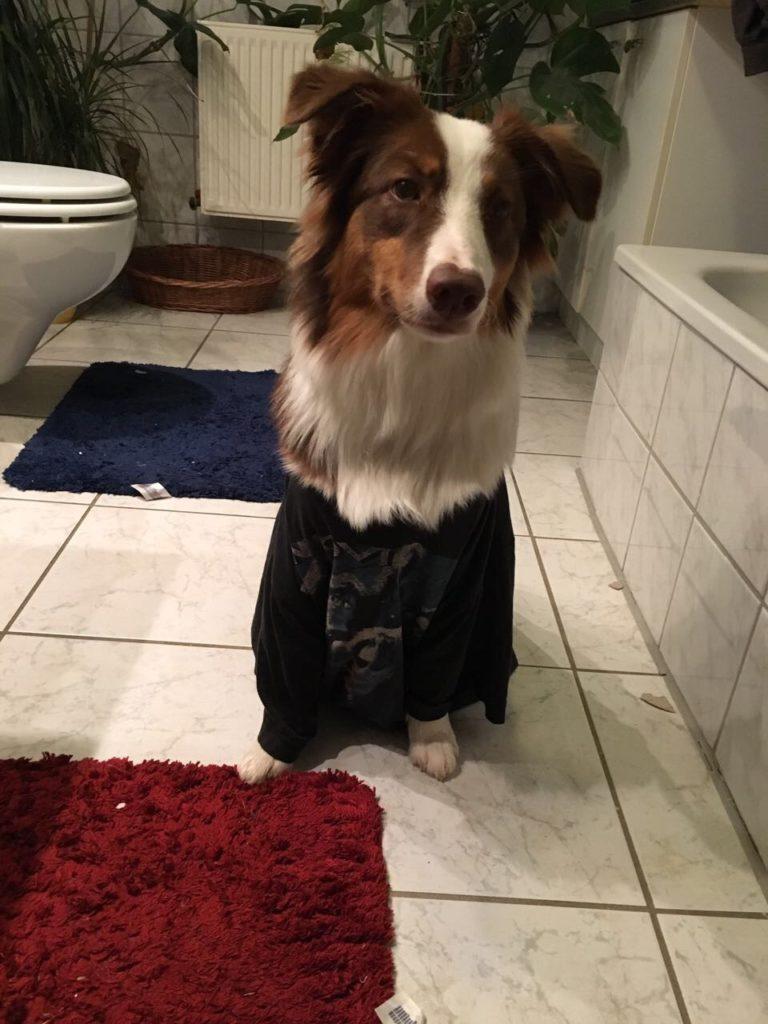Hundesicherer Garten - Hundetoilette