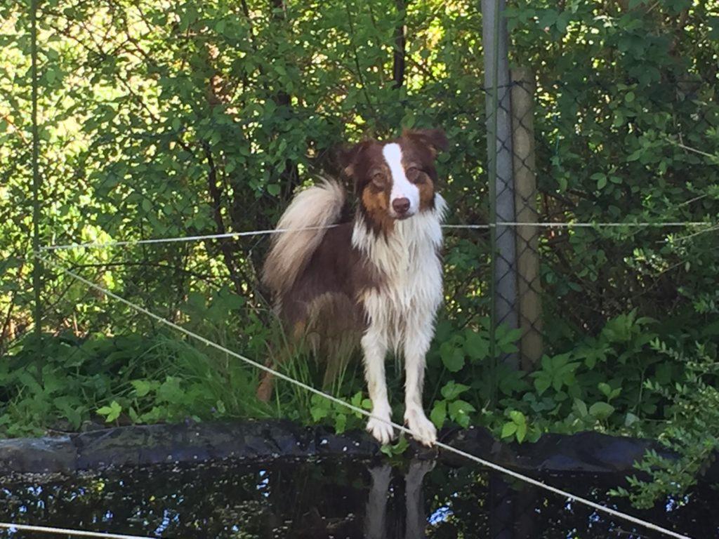 Hundegerechter Garten - Zaun für den Hund
