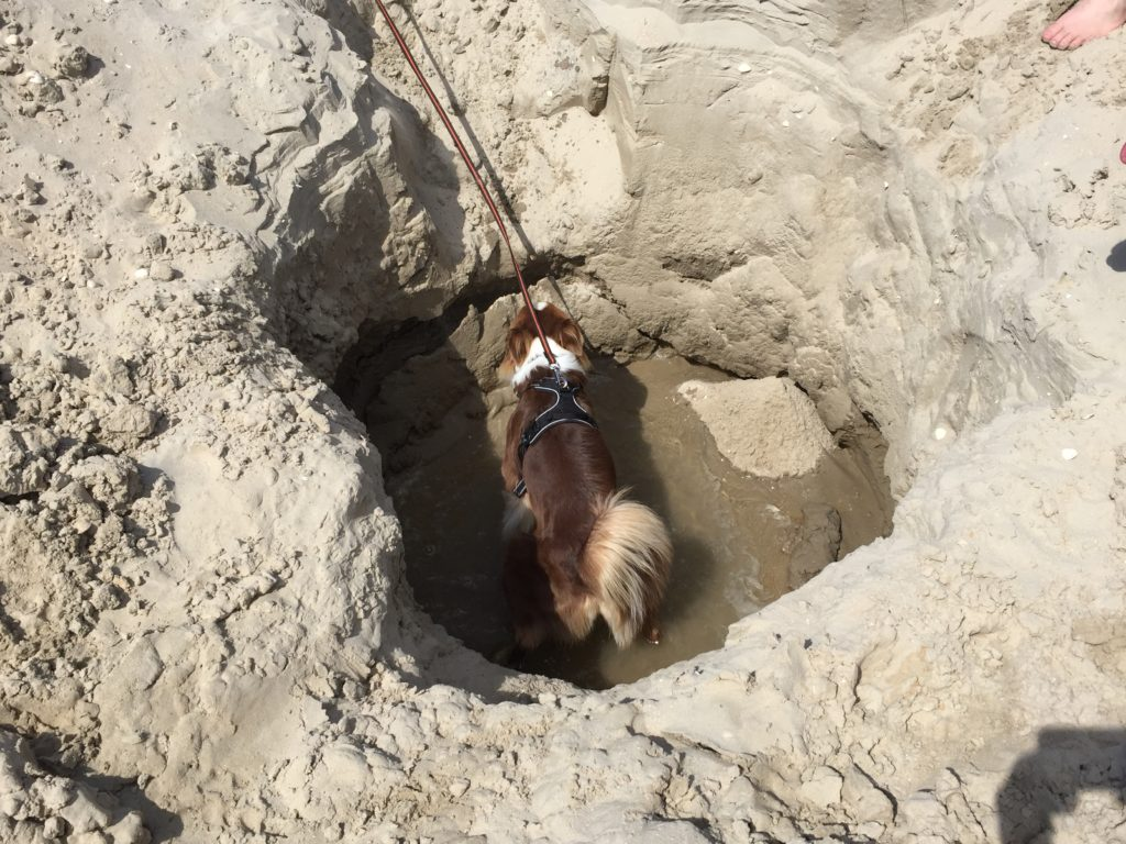 Hundesicherer Garten - Hund buddelt im Garten
