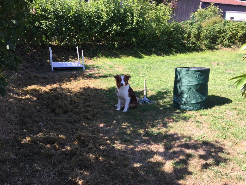 Hundegerechter GArten - Hund beißt in Gartengeräte