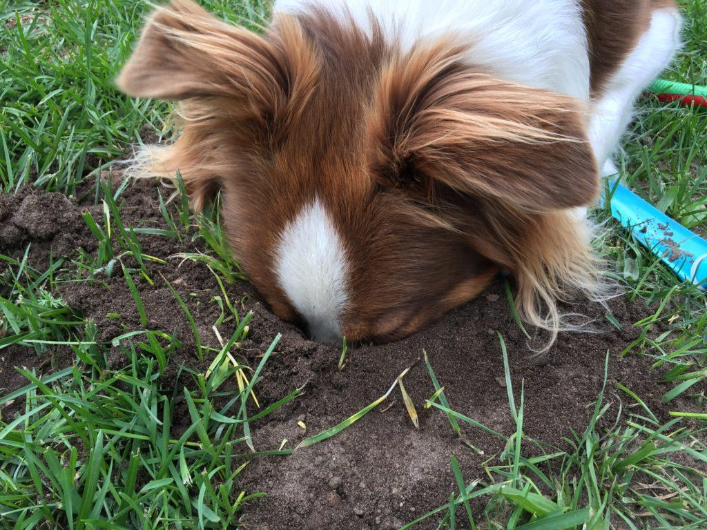 Hundesicherer hundegerechter Garten - Hund Beete graben