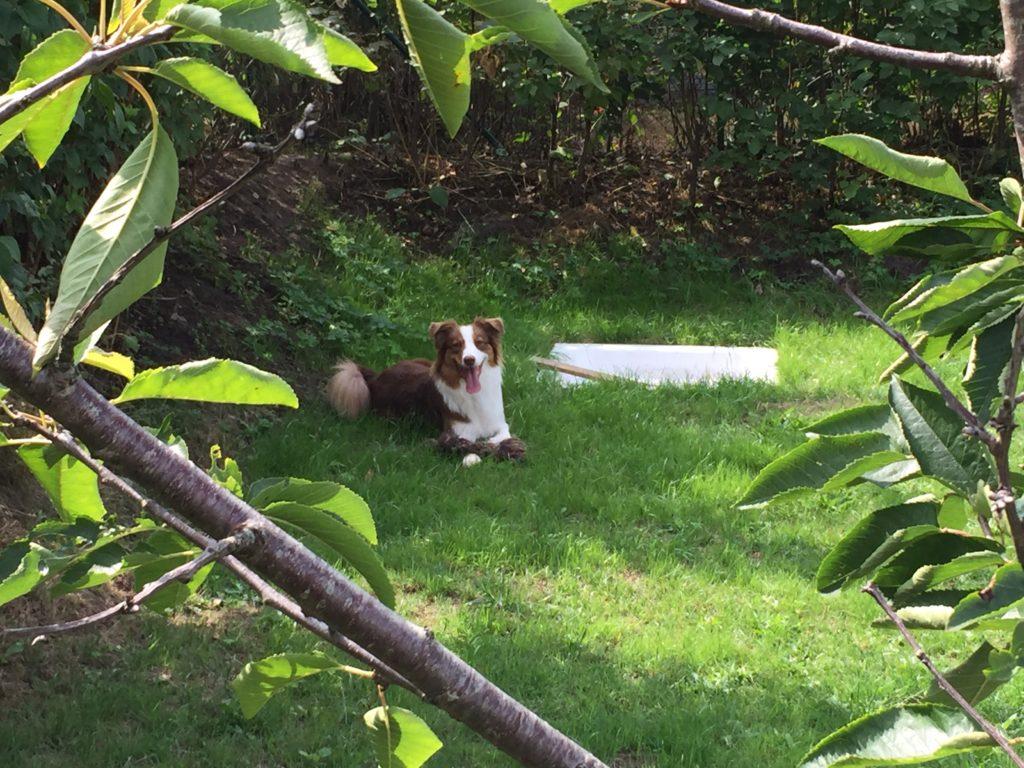 Hundesicherer Garten - Hund im Garten