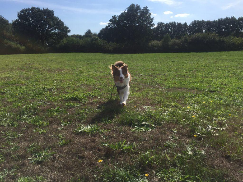 Hundesicherer Garten - Hund in unbekanntem Terrain