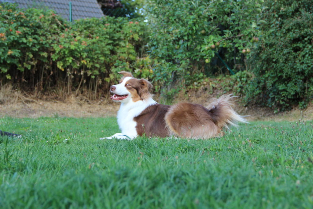 Hundesicherer hundegerechter Garten - Hund im Garten