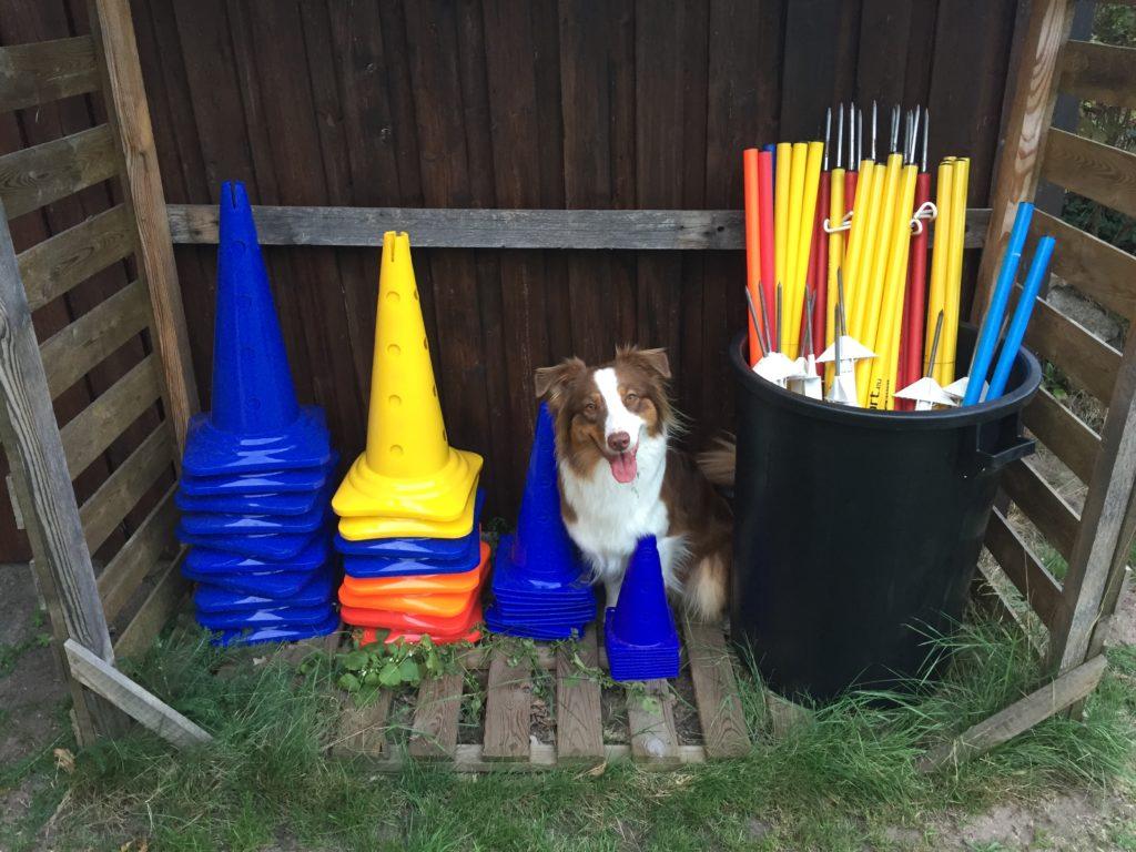 Hundesicherer Garten - Sprünge aufbewahren