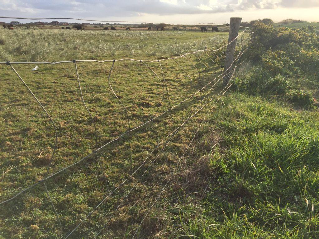 Hundegerechter Garten - Zaun für Hund