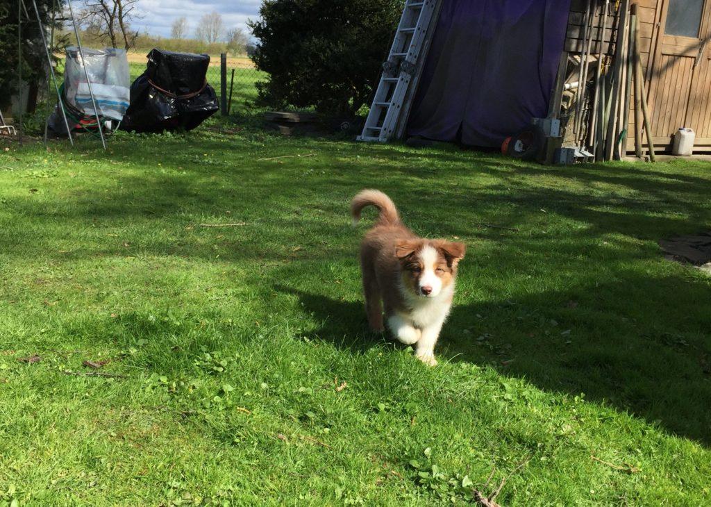 Hundesicherer Garten - Gartenzaun für Hund