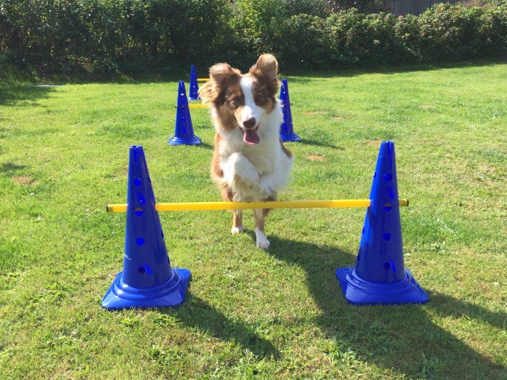 Hund überspringt Hürde gartenspielzeug.org