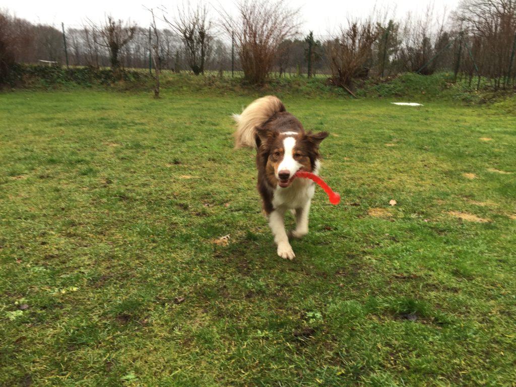 Gartenspielzeug Hund Safestix Kong