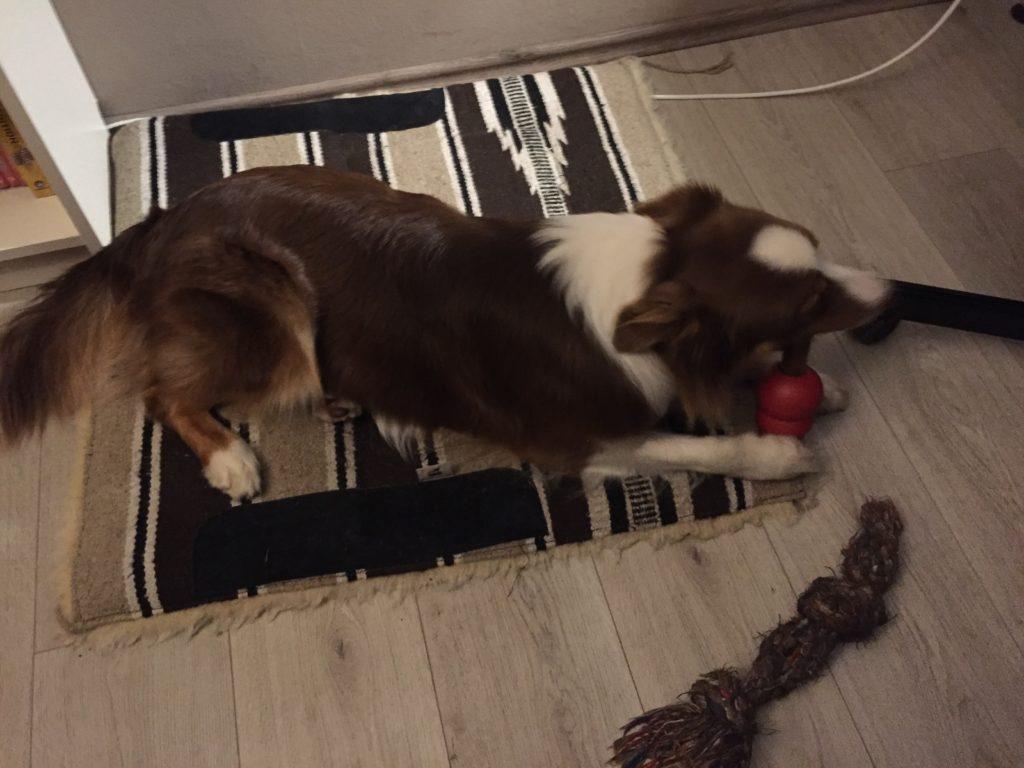 Gartenspielzeug Hund Kong Classic Büffelhautknochen