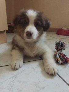 Kausnacks - Kauspielzeug - Hund