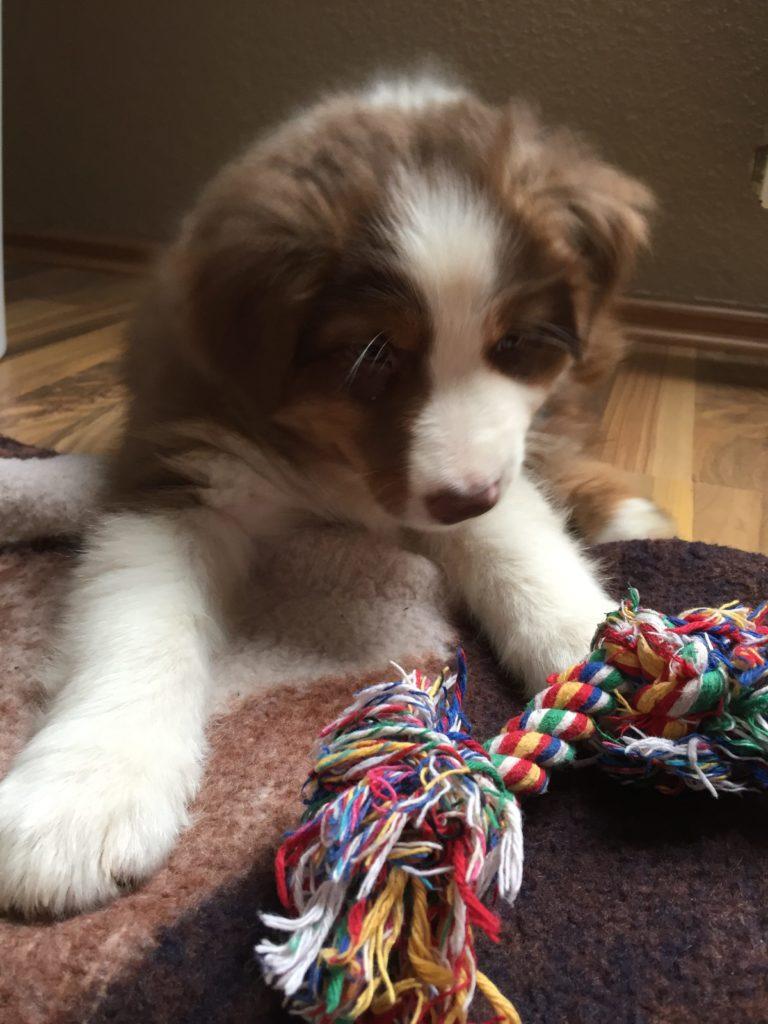 Kauartikel und Kausnacks für Hunde