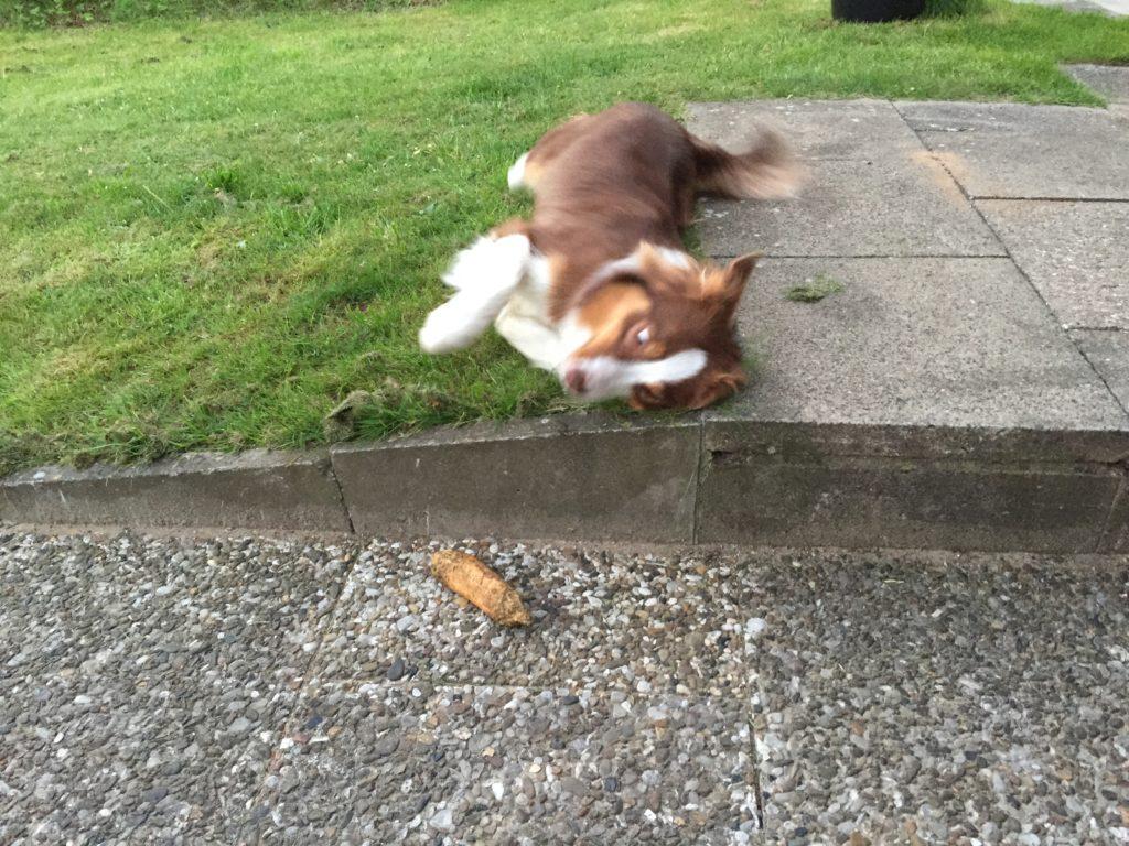 Kauspielzeug - Kauartikel für Hunde