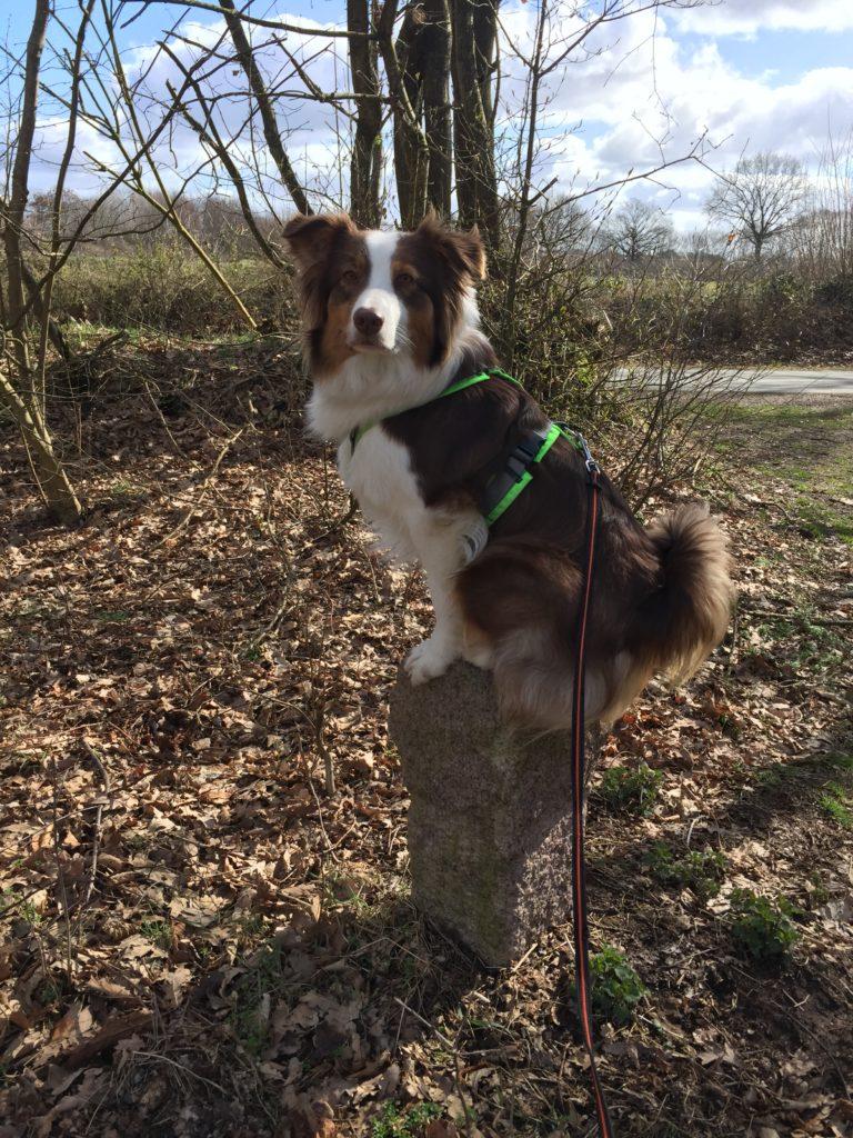 Kommando Sitz - Hundetraining - Hund Sitz beibringen - hundtastisch.de - Hundeerziehung