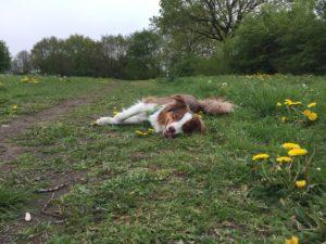 Abenteuer Spaziergang - Action mit Hund - Gartenspielzeug