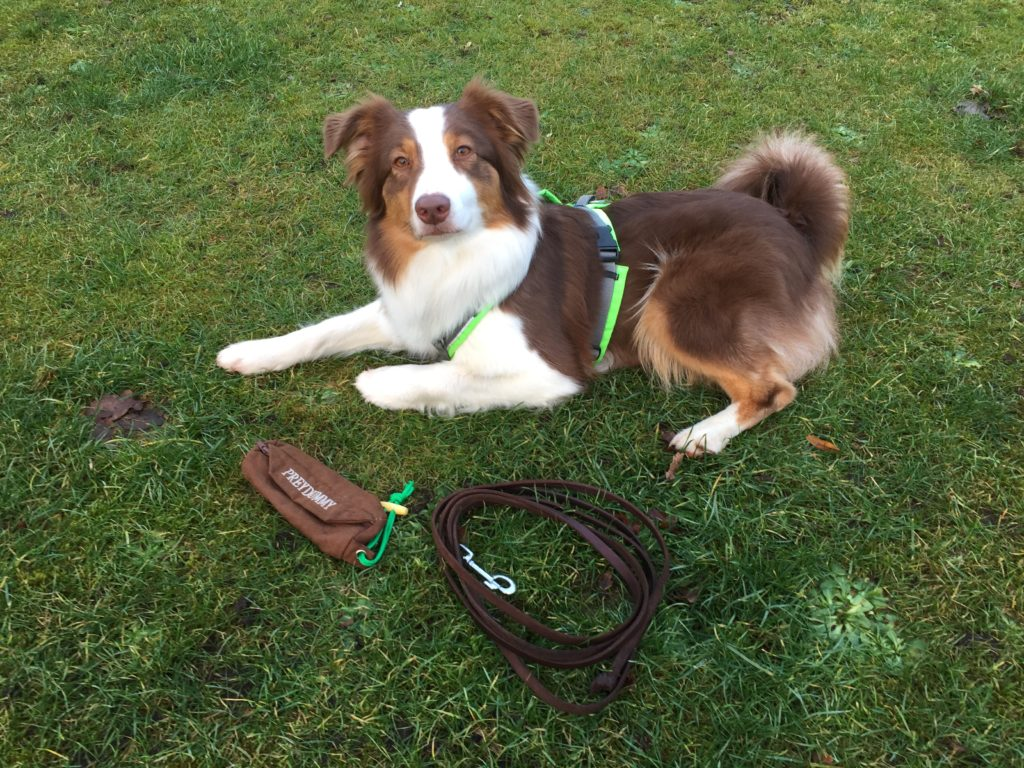 Vorurteile im Hundetraining - Über den Tellerrand blicken - Neues ausprobieren - Hunde erziehen - hundtastisch.de