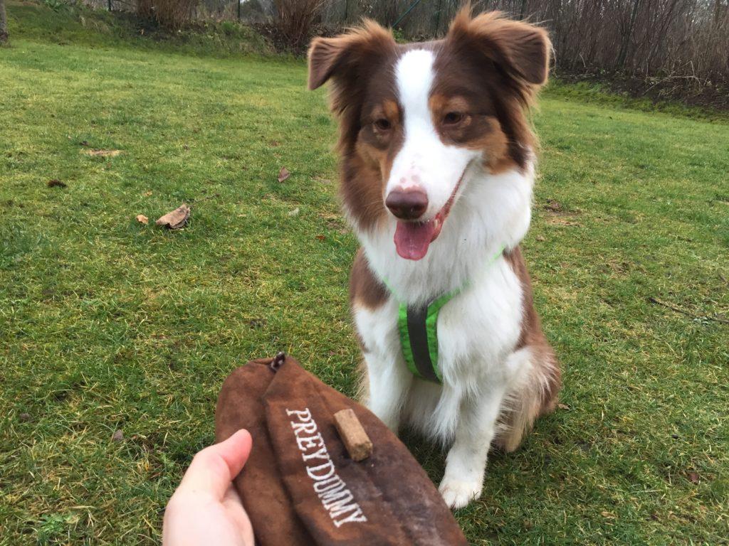 Futterbeuteltraining für jeden Hund - so traininerst du mit dem Futterdummy - hundtastisch.de