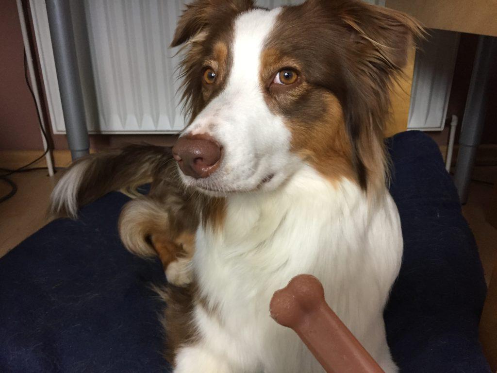 Test Erfahrungen mit dem Nylabone - hundtastisch.de - Kauartikel für Hunde - Hundespielzeug