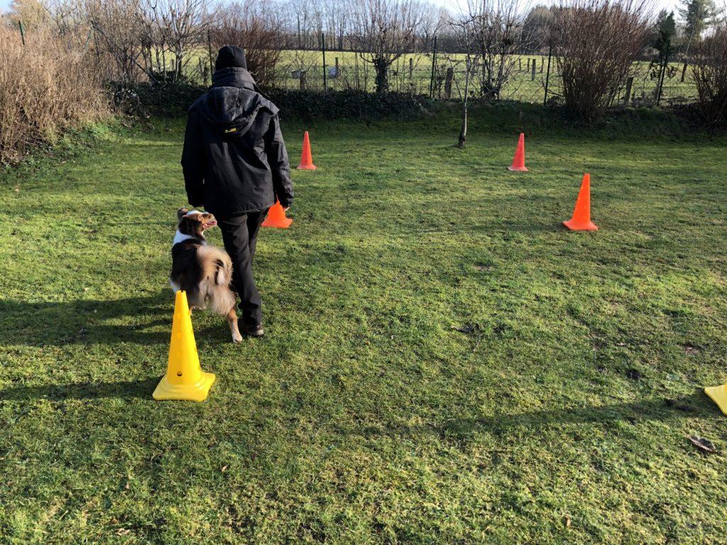 Das 6-Hütchen-Trainingsprogramm - Training mit dem Hund im Garten - Unterordnung - hundtastisch.de