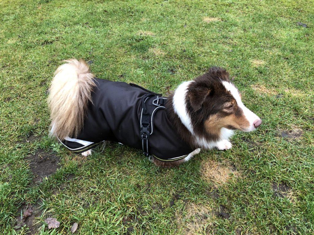 Regendecke - Regenmantel für Hunde - Test - Erfahrungen - hundtastisch.de