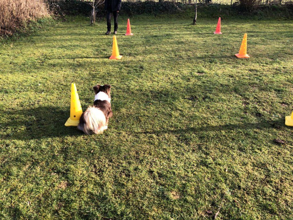 Kommando Bleib - Hundetraining - Hund bleib beibringen - hundtastisch.de