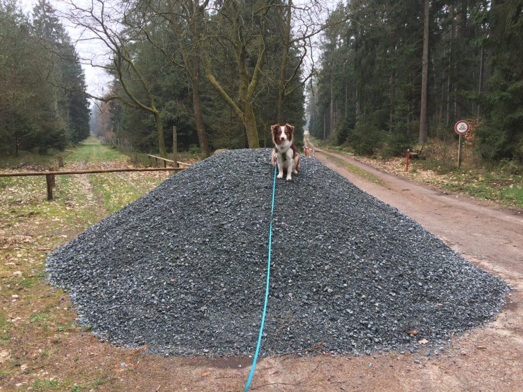 Flexileine - so schlecht wie ihr Ruf? - Hundetraining - Pro und Contra - hundtastisch.de