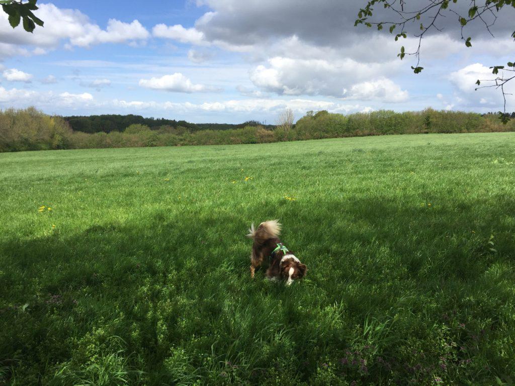 Hund Nasenarbeit - Futtersuche Beschäftigung für den Hund - Hundetraining - hundtastisch.de