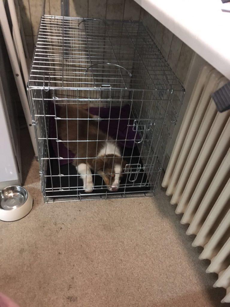 Hundebox Training - Hund an Kennel gewöhnen - Hund im Käfig - hundtastisch.de