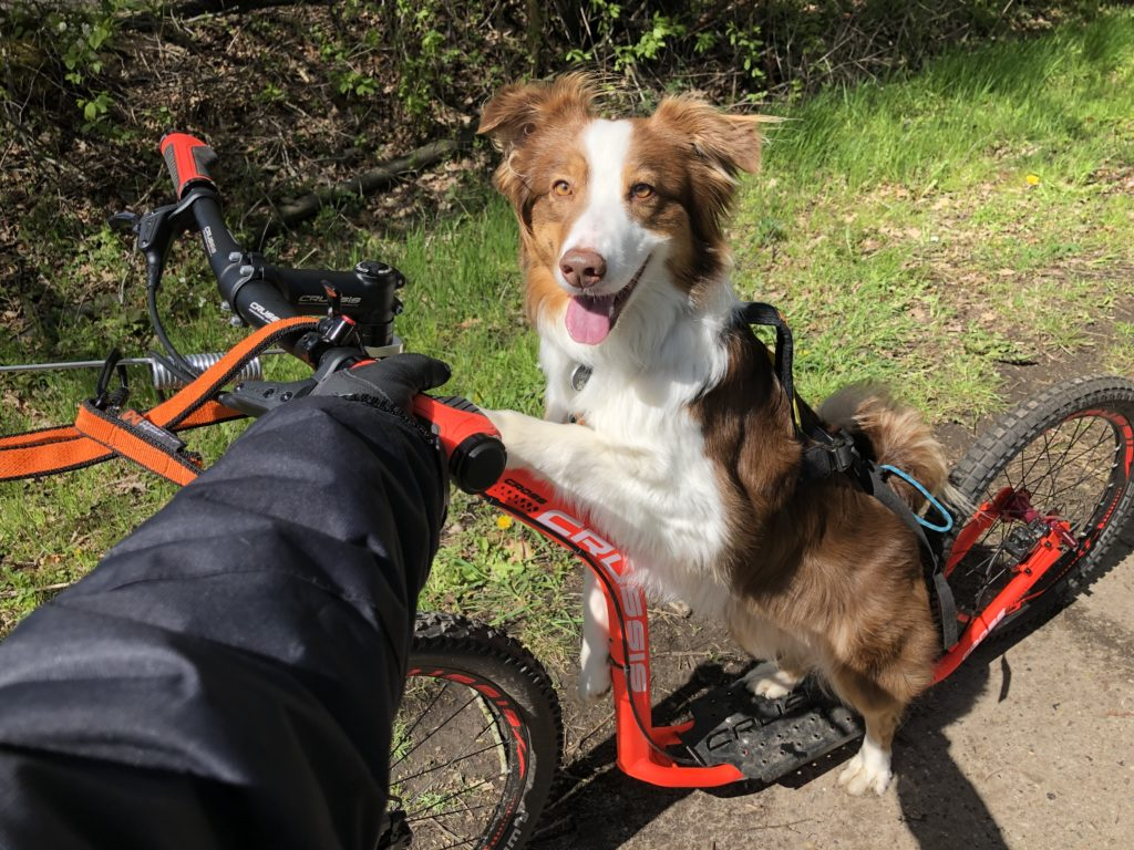 Hot Dog - mit dem Hund durch den Sommer - Tipps und Tricks für die heiße Jahreszeit - Hund abkühlen, beschäftigen im Sommer
